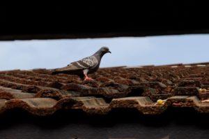 הדברת ציפורים